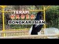 Kacer Fighter Bongkar Isian Gacor Kasar Tanpa Henti  Mp3 - Mp4 Download