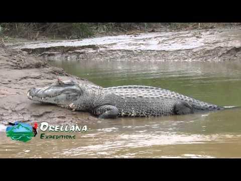 manu park rain forest   orellana expeditions