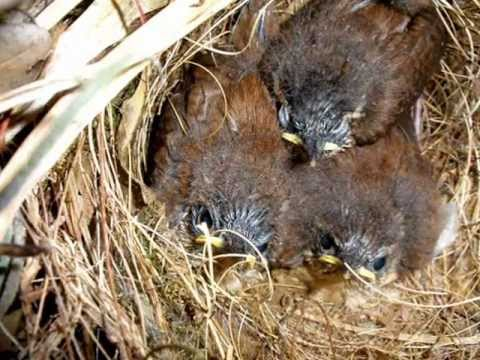 Sparrows Build Nest in My Patio Plant Eggs Laid Then