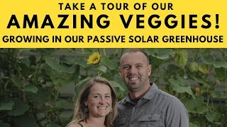 Tour Our Passive Solar Greenhouse Growing Our Amazing Veggies!