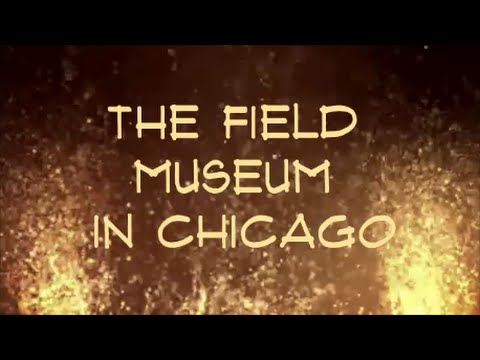 Field Museum of Natural History in Chicago - Animals , Fossils , Dinosaurs & More