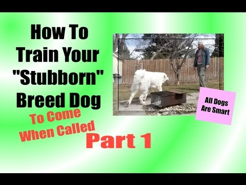 How To Train Your 'Stubborn' Breed Dog To Come When Called PART ONE