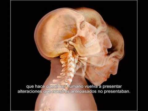 video columna y postura humana