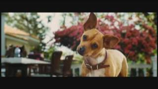 Chihuahua song - Dalton Sisters