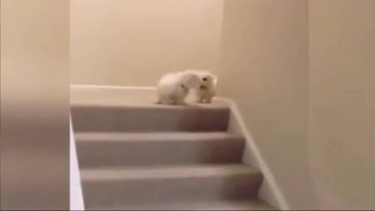 Perro tira por las escaleras a otro youtube - Escaleras para perros ...