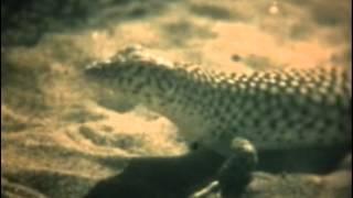 Ящерицы (1975)