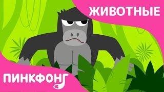 Буги-вуги в Джунглях | Песни про Животных | Пинкфонг Песни для Детей