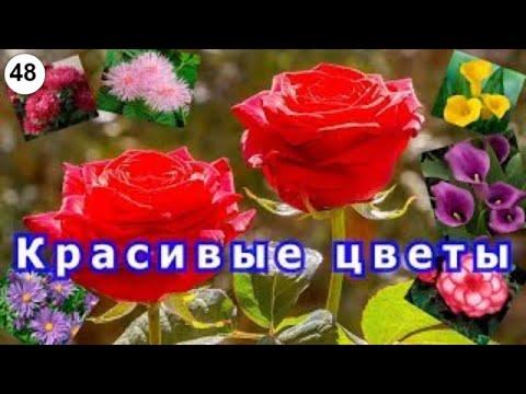 Красивые цветы.  #цветы #живые #красивые #букеты #прекрасные #волшебные