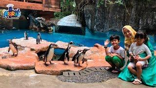 Lihat pinguin berenang dan main air di Taman Safari