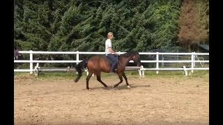 Pferde mit empfindlichem Rücken ohne Sattel reiten?