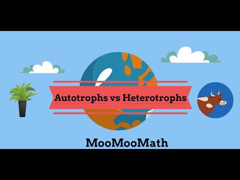 Autotroph vs Heterotroph Producer vs Consumer - YouTube