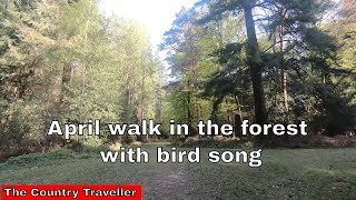 An April walk in The New Forest with Edith, the miniature schnauzer, with bird song #stayathome