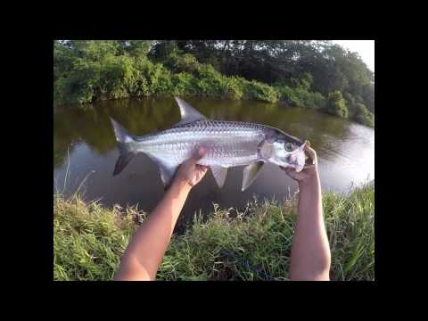 Exploring a NEW river/canal for SNOOK & TARPON  - Inshore Fishing, Trinidad - Caribbean