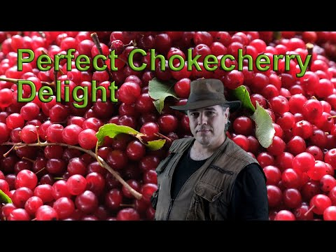 Perfect Chokecherry Jelly
