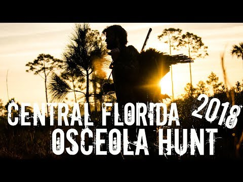 Osceola Turkey Hunt: Florida Public Land Palmetto Flats