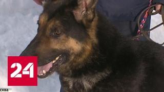 Собаки-убийцы: жертвами стали пожилая женщина и 5-летний ребенок