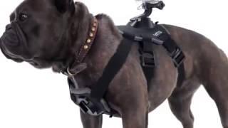 Крепление упряжка для собак GoPro Fetch Dog Harness ADOGM 001 - pyn.com.ua