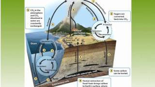 APES CH 3 Water cycle and carbon cycle