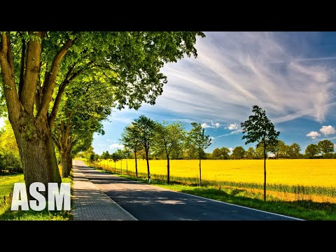 (No Copyright) Romantic Cinematic Background Music For Videos | Free Download - by AShamaluevMusic