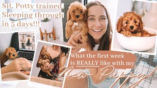 PICKING UP MY CAVAPOO PUPPY // First week with my TOY CAVOODLE puppy VLOG!