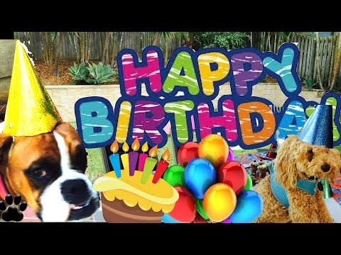How to host a DOG BIRTHDAY PARTY - How to throw your dog a party- a tutorial by Cooking For Dogs