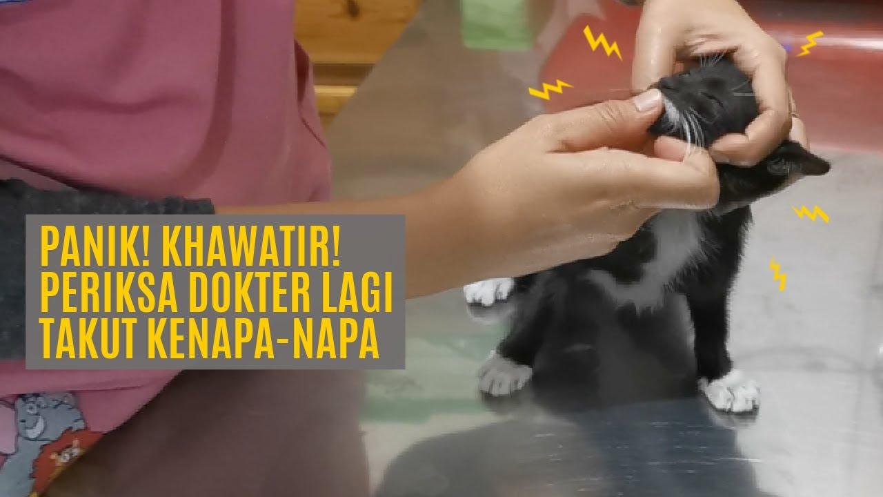 Mendadak Muntah 4 Kali Dalam 1 Jam, Bayi Kucing Periksa Ke Dokter Lagi