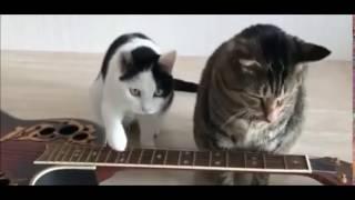 Коты, приколы, мило