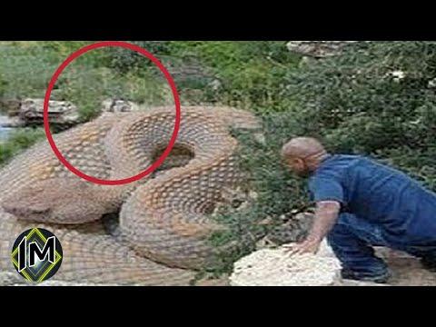 I 5 Serpenti Più Grandi Del Mondo