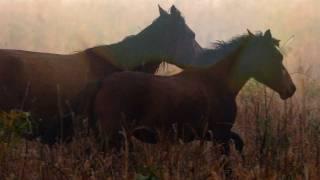 mihai vasile caii salbatici din delta dunarii salvati de vier pfoten