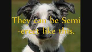 Why Border Collie's are the best!