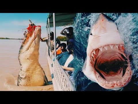 The MOST DANGEROUS ANIMALS In Australia