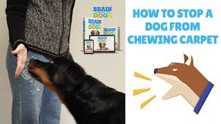 How To Stop A Dog From Chewing Carpet