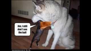 Funny Dog Sayings
