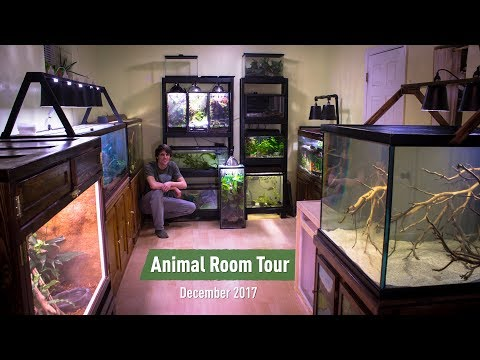 Animal Room Tour Dec. 2017 (70+ Animals) - Updates & Sneak P