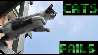 Смешные коты падают