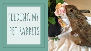 What I Feed My Rabbits - Gardening for Rabbits