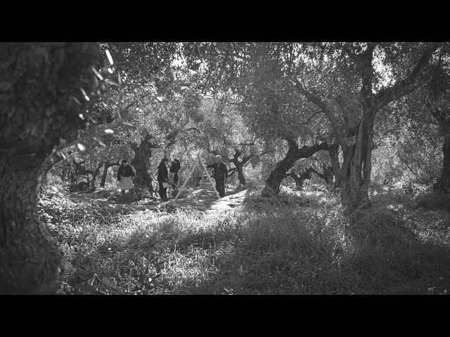 An  Inspiration - An Idea! Taste the original olive oil history