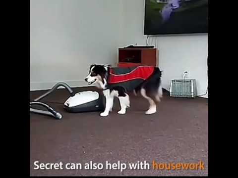 Talented Dog's mind blowing performance, Dancing with owner
