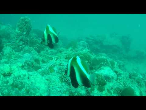 SCUBA Diving In The Andamans - Havelock Island - Pilot Reef