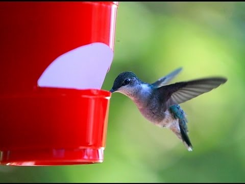 how to make a cheap hummingbird feeder youtube is mccormick food coloring safe for hummingbirds hummingbird feeder recipe food coloring