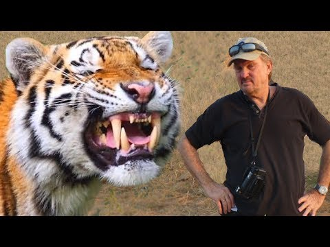 WILD TIGERS OF INDIA STORY