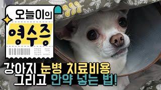 강아지 눈병안약넣는법, 병원비용 공개! 4K