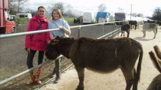 Our Trip to the Donkey Sanctuary Thumbnail