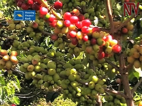 Coffee sector sets sights on ambitious target of 20% increase in local consumption