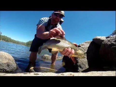 Apache trout christmas tree lake fly fishing arizona for Apache lake fishing