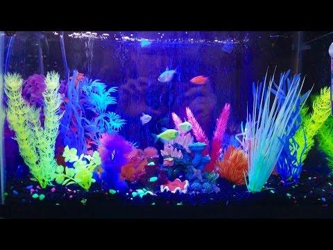 My Glofish Aquarium!