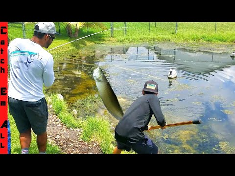 EXOTIC AROWANA FISH CATCH in SMALL FLORIDA POND!