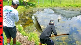 EXOTIC AROWANA FISH CATCH in SMALL FLORIDA POND!