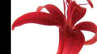 92 антон вадик и свадьба цветы(, 2016-11-23T11:15:12.000Z)