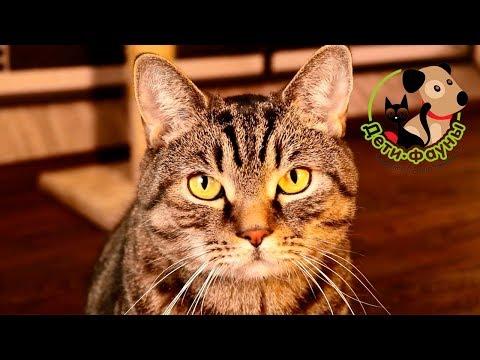 Вопрос: Можно ли кормить сухим кормом кота при мочекаменной болезни Почему?